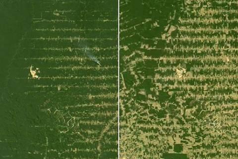 Postagem de Leonardo DiCaprio sobre desmatamento
