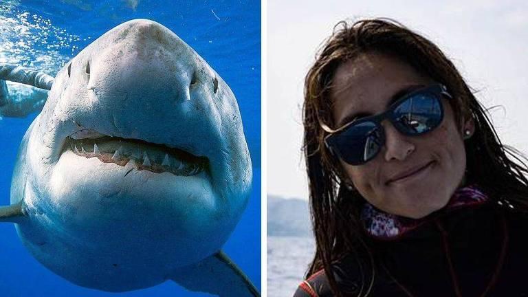 Tubarão-branco foi acompanhado pela mergulhadora e fotógrafa Kimberly Jeffries