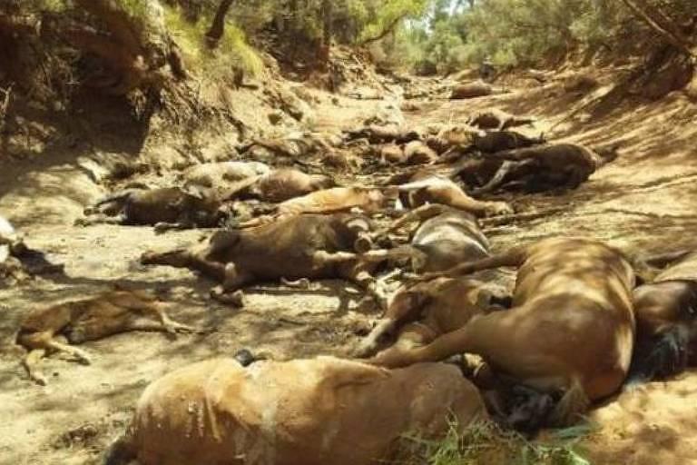 Cavalos morrem em onda de calor na Austrália