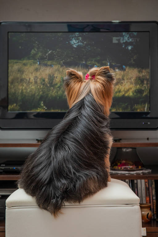 Cães assistem à Dog TV