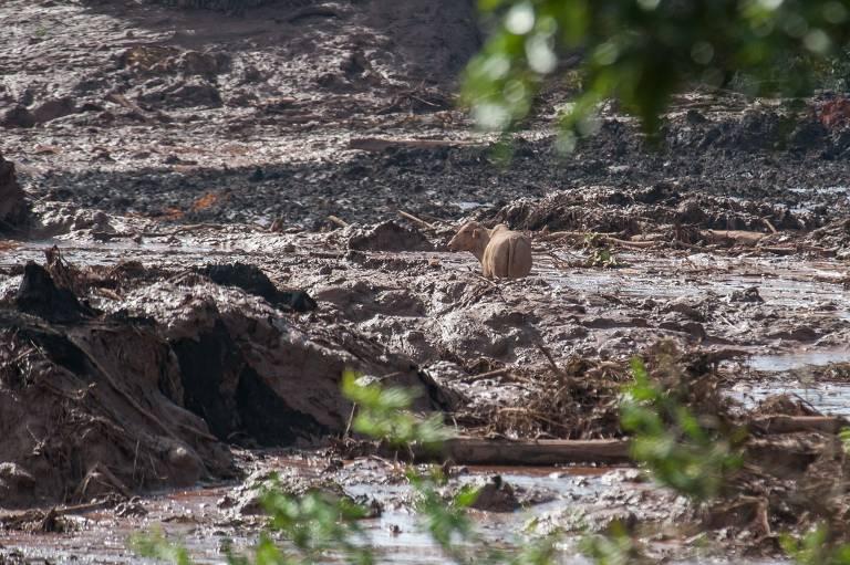 Barragem rompida em Brumadinho