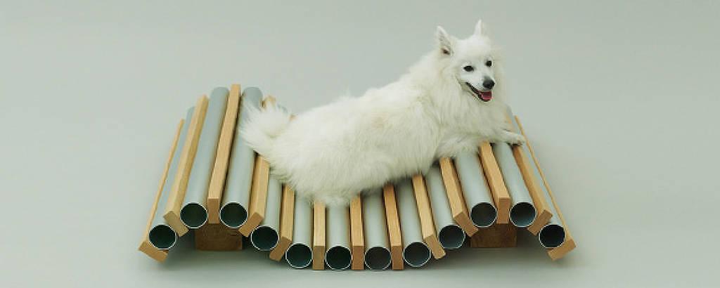 Dog Cooler, por Hiroshi Nato para um cão da raça spitz