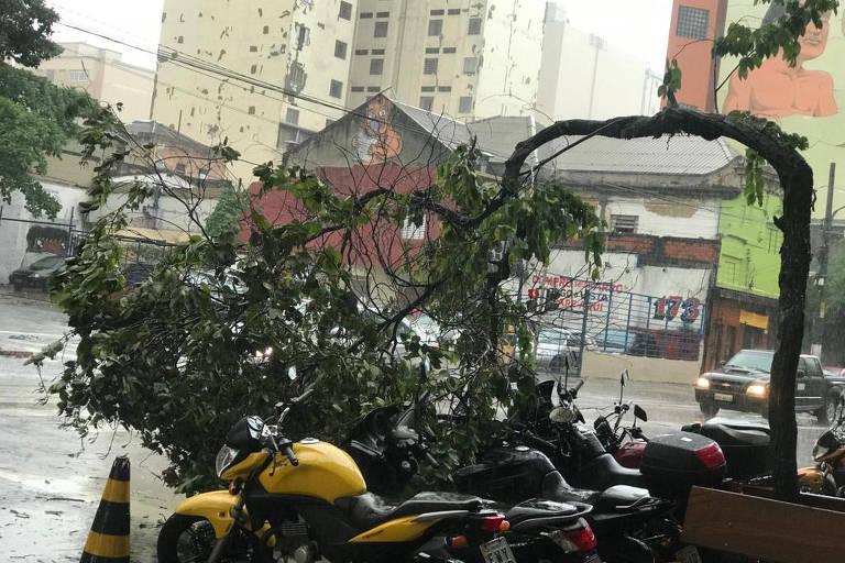 Árvores caem após forte chuva em SP