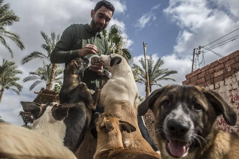 Ahmed el-Shorbagi, do abrigo Hope, alimenta cães em Abusir, perto do Cairo