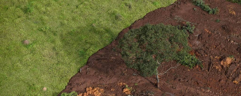 lama sobre campo verde