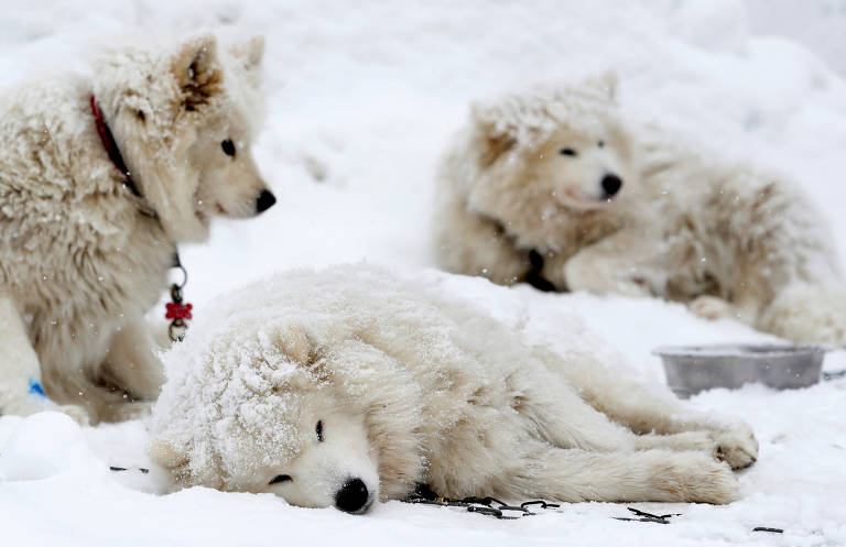 Cães descansam antes de corrida na República Tcheca