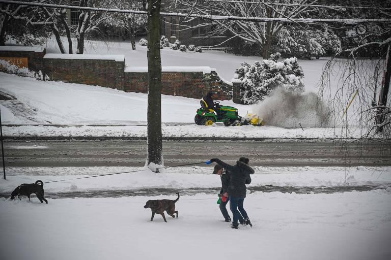 Cães na neve - 2019