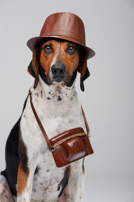 Barão - tem 6 anos e é o líder do time canino, com mais de 700 buscas bem sucedidas em seu currículo