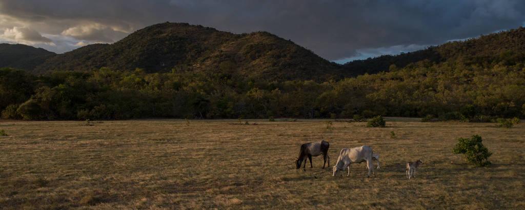 Produção agropecuária na Terra Indígena Raposa Serra do Sol (RR), cuja demarcação tem sido criticada pelo presidente Jair Bolsonaro