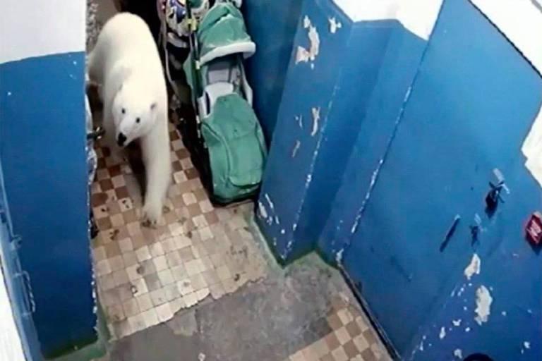 Mais de 50 ursos polares invadem aldeia russa