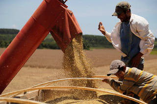 Soybeans are transferred into a truck after being harvested in Caagauzu