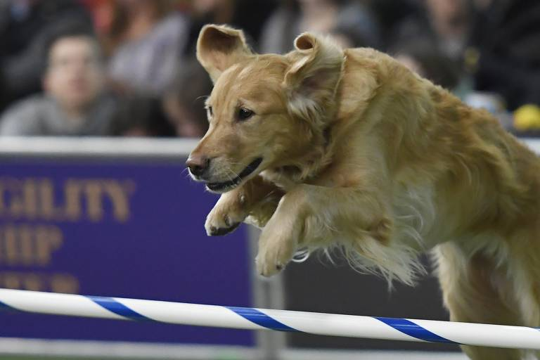 Concurso do Westminster Kennel Club