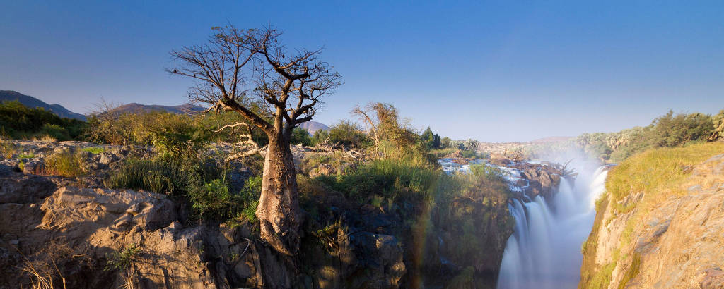 árvore gigante próxima de cachoeira