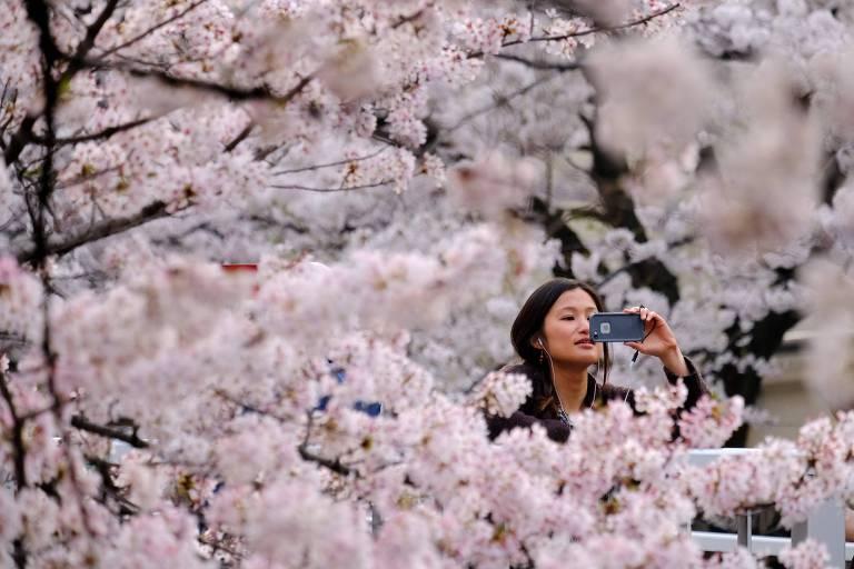 mulher tira foto com celular de cerejeira repleta de flores