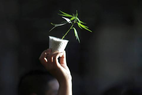 A woman holds up a cannabis plant during a demonstration in support of the legalization of marijuana in Buenos Aires, December 4, 2014.  REUTERS/Marcos Brindicci (ARGENTINA - Tags: POLITICS CIVIL UNREST DRUGS SOCIETY) ORG XMIT: BAS108