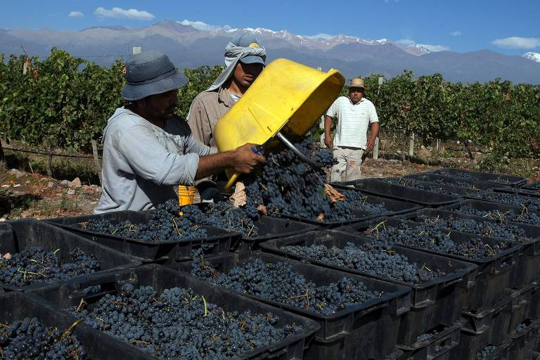 Sem renda, argentino bebe menos de 1/4 do vinho que consumia há 40 anos