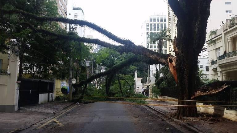 Árvore caída na rua dos Franceses, Bela Vista, região central de SP