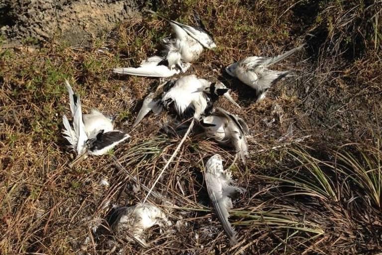 Aves mortas