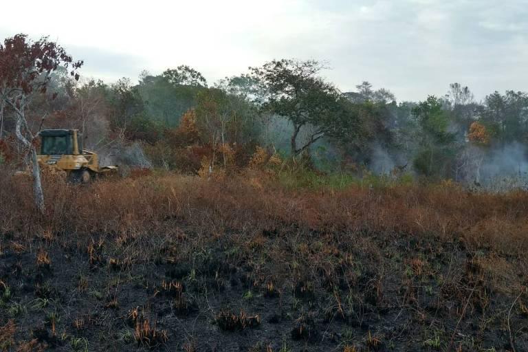 Mata queimada da reserva Refúgio de Vida Silvestre do Rio dos Frades, em Porto Seguro
