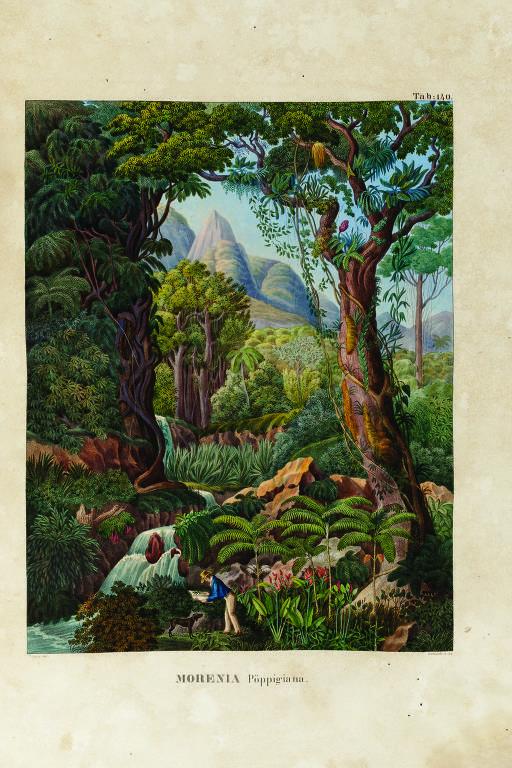 Expedição do botânico alemão Martius ao Brasil