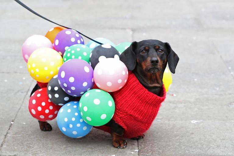 Carnaval dos cães
