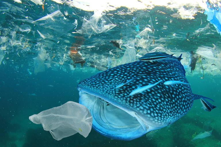 Animais sofrem com plástico nos oceanos