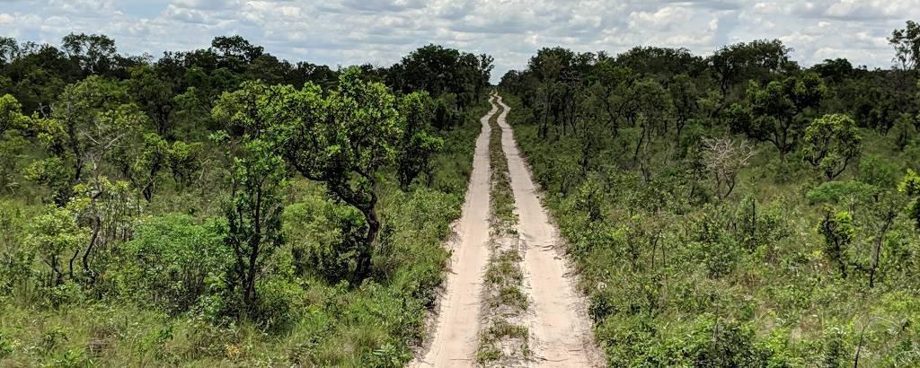Estrada de terra cercada de vegetação rasteira