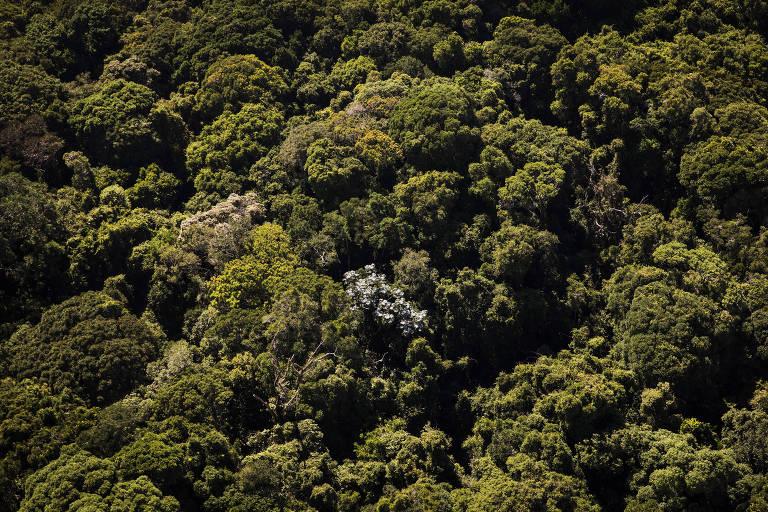 Área de mata atlântica no distrito de Caucaia do Alto, em Cotia (SP)