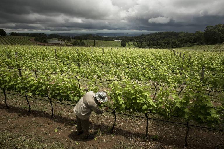 Sommelière indica 5 lugares para quem gosta de vinhos