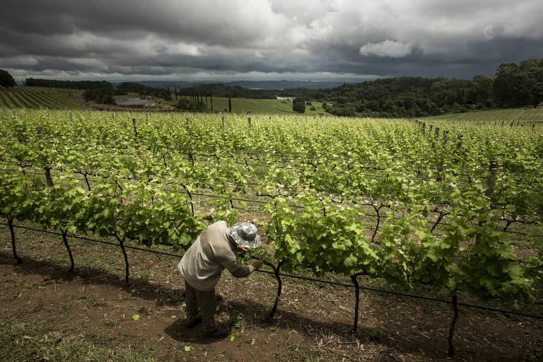 Sommelière indica regiões vinícolas na América do Sul e na Europa