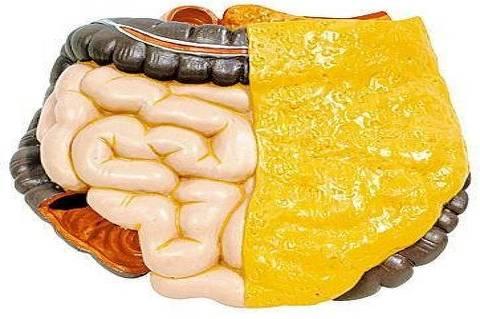ORG XMIT: 004501_0.tif Reprodução de um intestino humano. (Reprodução)
