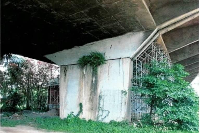 Vegetação toma conta de estrutura de viaduto reaberto pela prefeitura