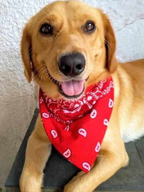 Pet do leitor - 3 - Bom Pra Cachorro