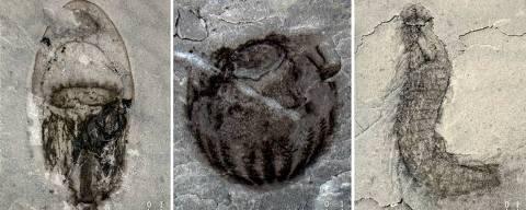 Fósseis da biota de Qingjiang