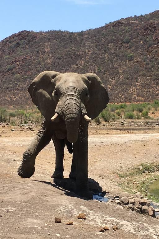 Elefante de frente, com perna dianteira direita levantada, com montanha ao fundo