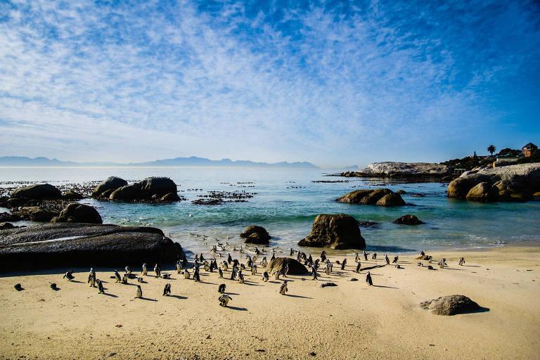 Pinguins em praia, com pedras no mar