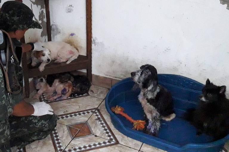 Maus tratos a animais em Cananeia