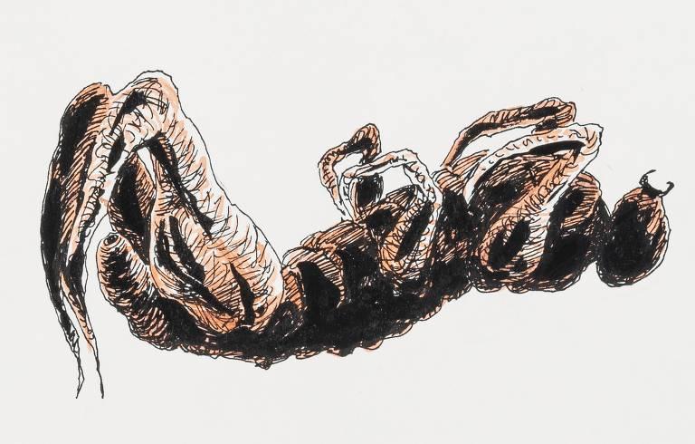 """Ilustrações de Lourenço Mutarelli para a nova edição de """"A Metamorfose"""", de Franz Kafka, que sai pela editora Antofágica"""