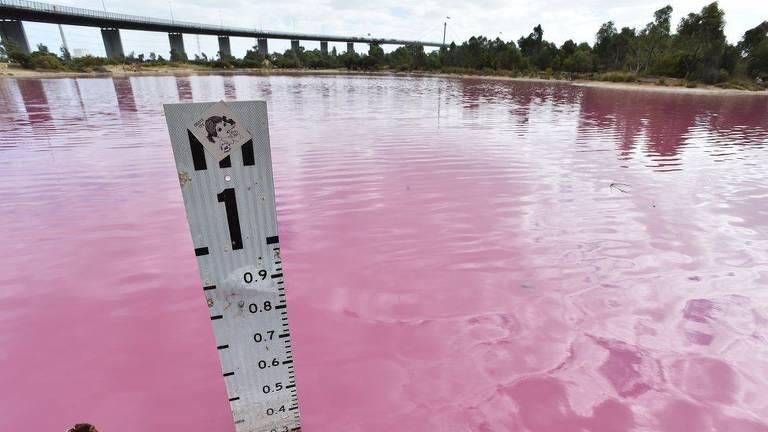 Lago com de rosa
