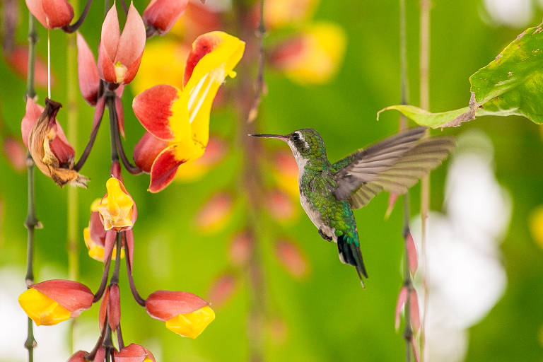 Natureza no Casarão do Chá