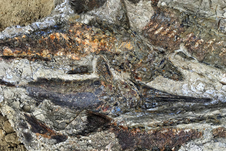 A tangled mass of articulated fish fossils uncovered in North Dakota. The site appears to date to the day 66 million years ago when a meteor hit Earth, killing nearly all life on the planet