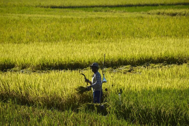 Agricultor em plantação de arroz em Banda Aceh, na Indonésia
