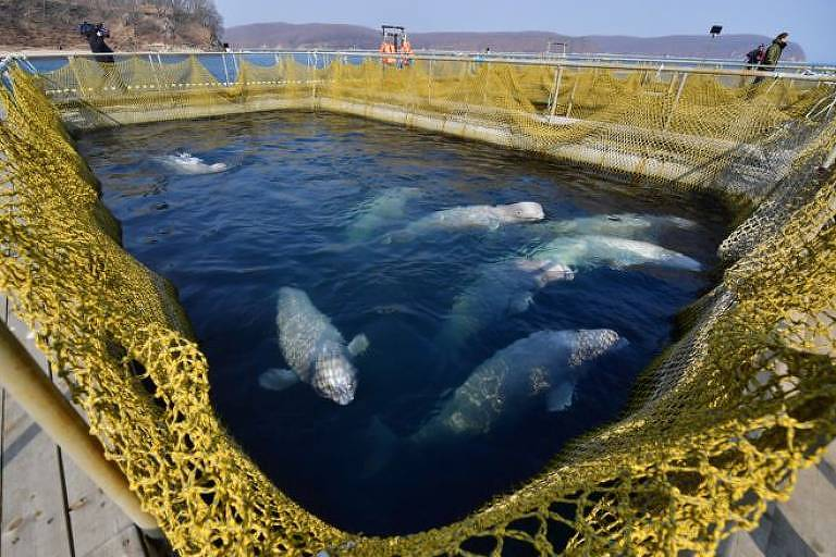 Animais aquáticos em tanque