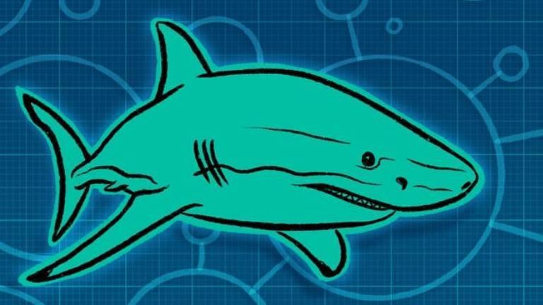Material inspirado na pele dos tubarões vai poder revestir no futuro superfícies hospitalares e reduzir infecções bacterianas