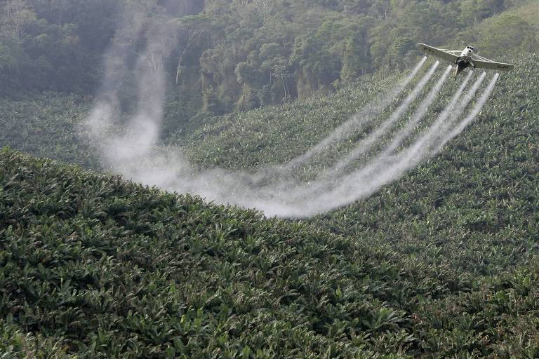 Avião despeja agrotóxico em bananal de Miracatu (SP), região do Vale do Ribeira