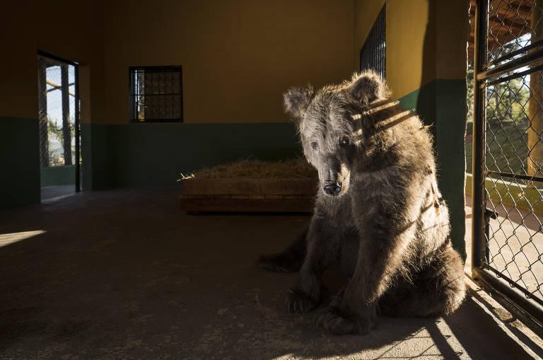 A ursa que era a mais triste do mundo