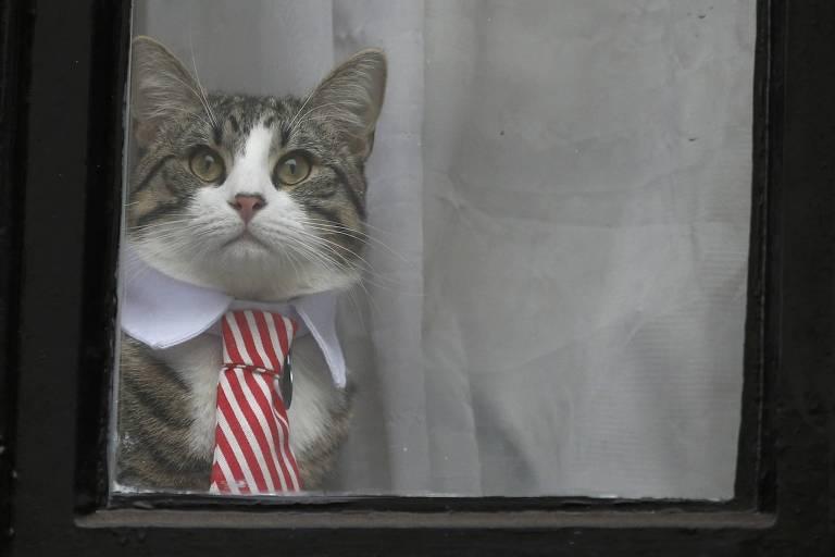 """Gato aparece em janela vestindo """"gola"""" de uma cmaisa social e uma gravata listrada em branco e vermelho"""