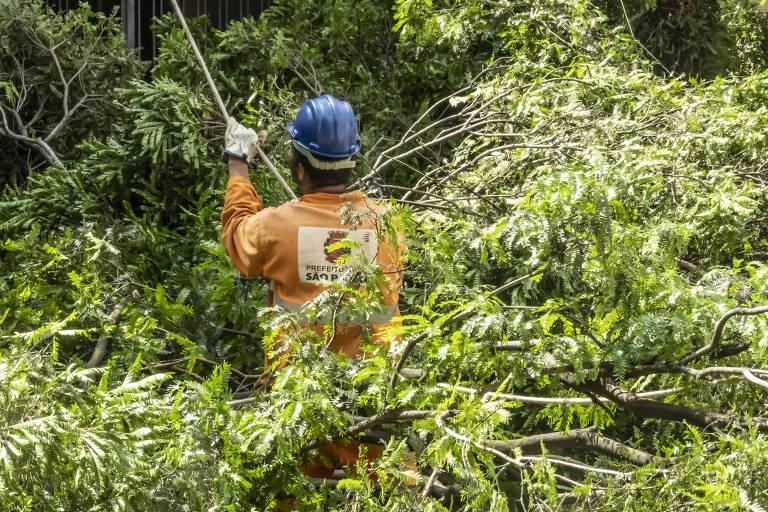 Equipe de poda e remoção de árvores da Prefeitura