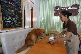 A server places a lasagna dish in front of a labrador retriever named Jack, at Whole Pet Kitchen, a human and pet restaurant in San Juan, Metro Manila