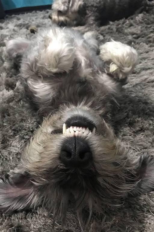 Cãozinho Otávio